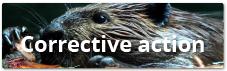 Corrective action module in HSEQ Online